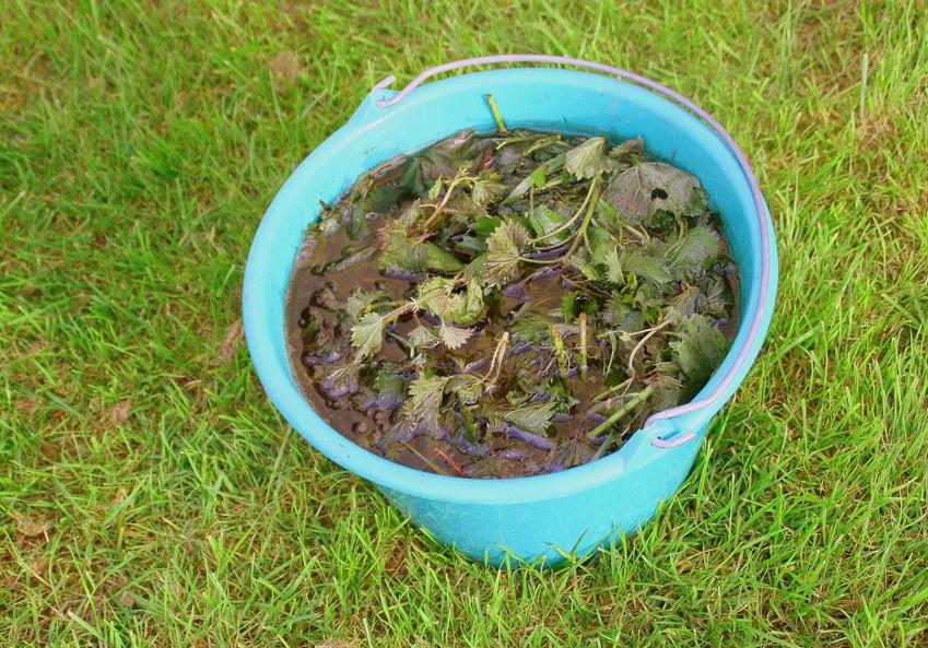 Gnojówka z pokrzyw w wiaderku czy gnojówka z pokrzywy lub nawóz z pokrzyw oraz jego skład, proporcje i zastosowanie