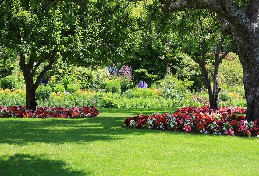 Byliny do cienia, czyli rośliny do cienia i do półcienia oraz polecane kwiaty do zacienionego ogrodu