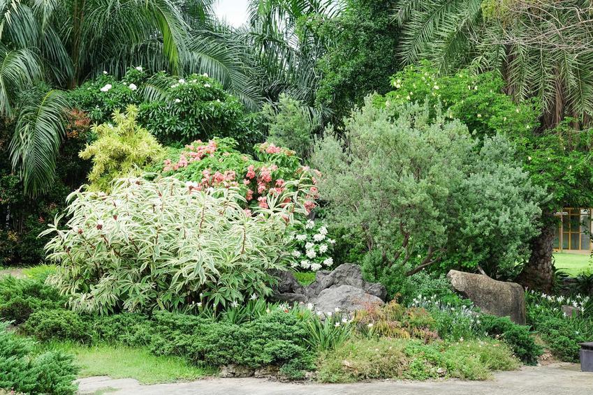 Rośliny cieniolubne do ogrodu, czyli krzewy cieniolubne, kwiaty cieniolubne, byliny do cienia na rabaty i polecane gatunki