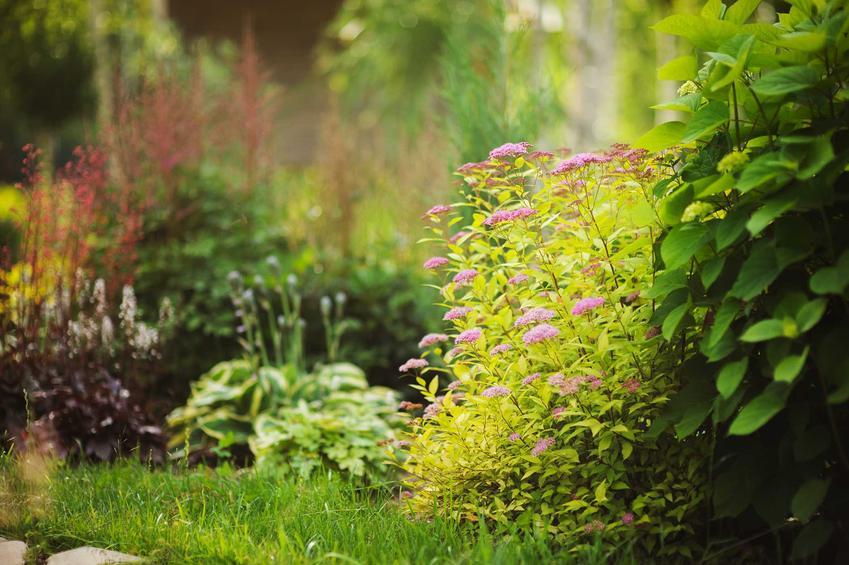 Kwiaty cieniolubne i rośliny cieniolubne do ogrodu oraz ogrodowe kwiaty rabatowe oraz kwitnące, ozdobne krzewy lub byliny do cienia