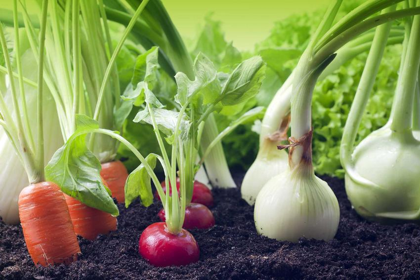 Najlepsze terminy do sadzenia i siania warzyw w ogrodzie, a także jak założyć ogród warzywny krok po kroku