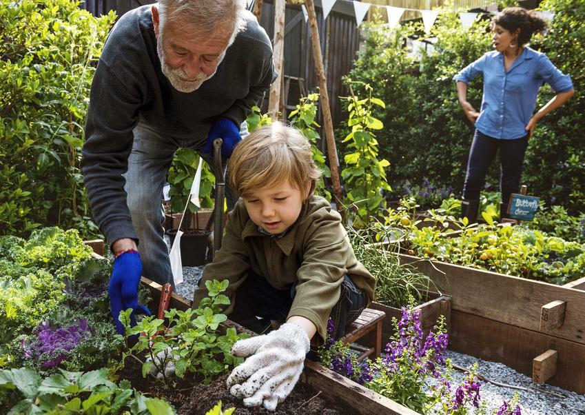 Kalendarz siewu warzyw - dowiedz się, kiedy sadzić lub siać poszczególne rodzaje warzyw, odmiany i gatunki w ogrodzie