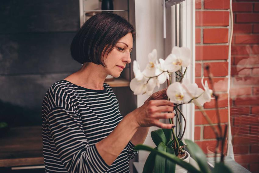Kobieta przy storczyku oraz rozmnażanie storczyków i rozsadzanie storczyków, czyli porady, jak rozmnażać storczyki i jak zaszczepić storczyka