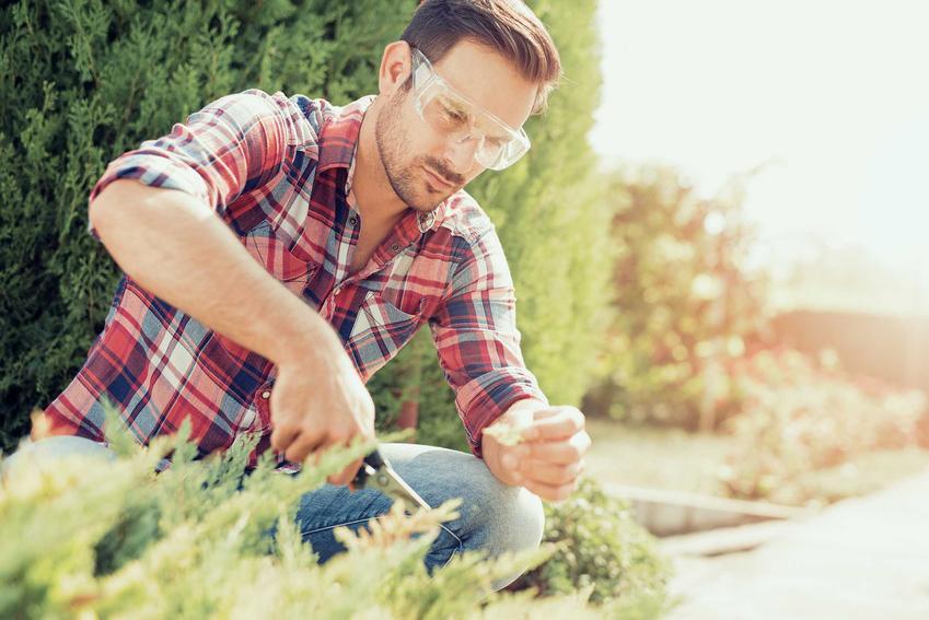 Przycinanie traw ozdobnych przez mężczyznę, w tym przycinanie trawy pampasowej i cięcie traw innego rodzaju na wiosnę po zimie