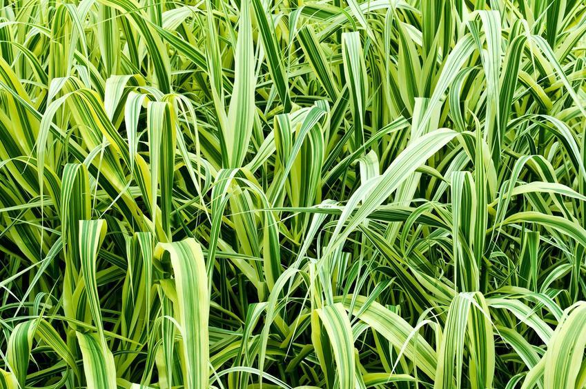 jak przedłużyć montację trawy)
