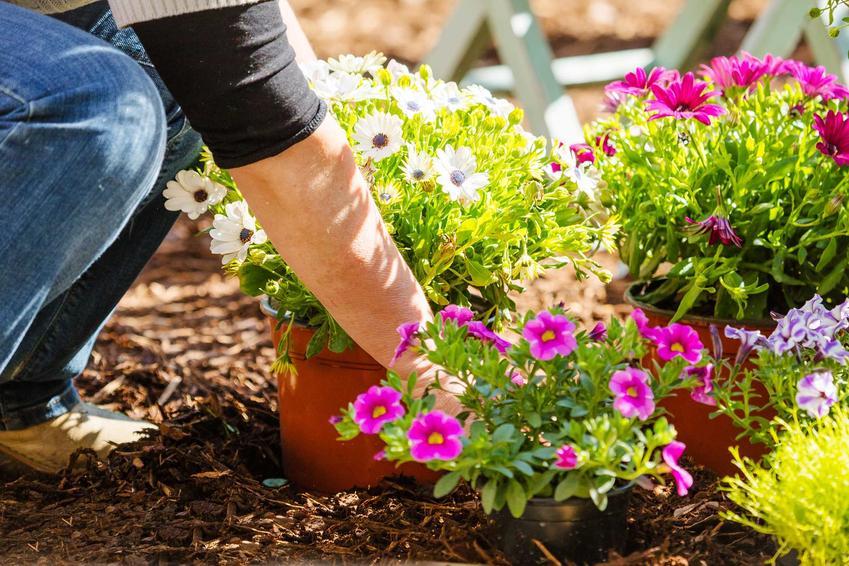 Aranżacja i urządzenie ogrodu przez profesjonalnych ogrodników to niezbyt droga usługa. Wybór roślin i zrobienie projektu ogrodu wchodzi w zakres usług podstawowych