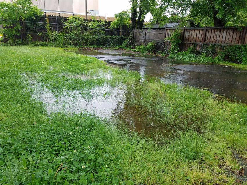 Podtopiony ogród wiosną, czyli przedwiośnie w ogrodzie i zagrożenia z nim związane, największe szkody dla roślin