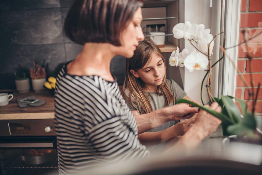 Kobieta z dzieckiem i storczyki oraz przekwitnięty storczyk i pielęgnacja po przekwitnięciu oraz przycinanie storczyków po kwitnieniu