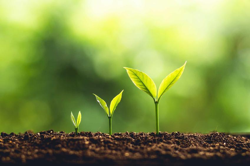 Sadzonki roślin oraz ukorzeniacz do roślin, w tym polecane ukorzeniacze do roślin zdrewniałych czy ukorzeniacz do iglaków