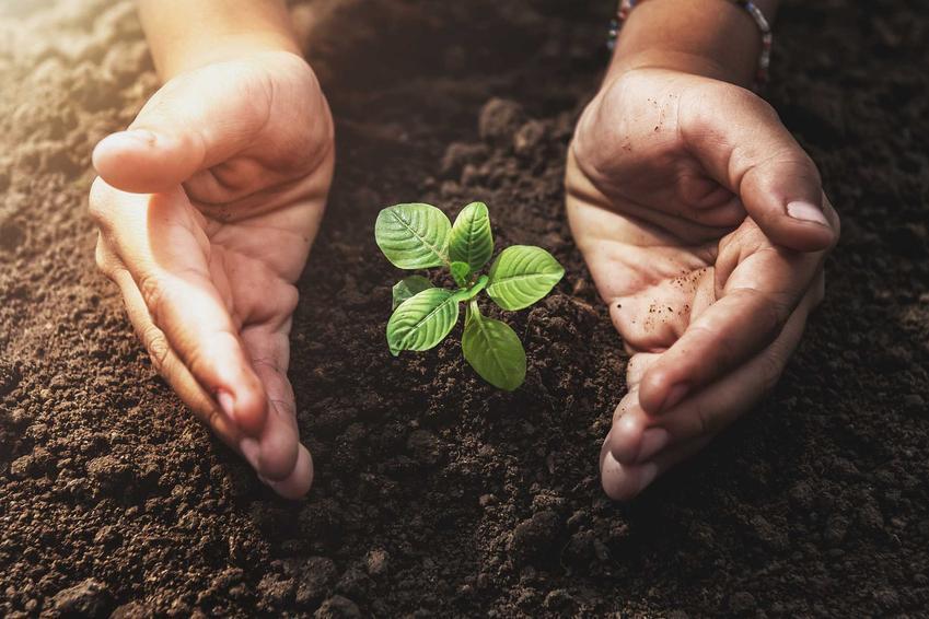 Sadzonka roślin oraz ukorzeniacz do roślin, w tym polecane ukorzeniacze do roślin zdrewniałych lub do iglaków