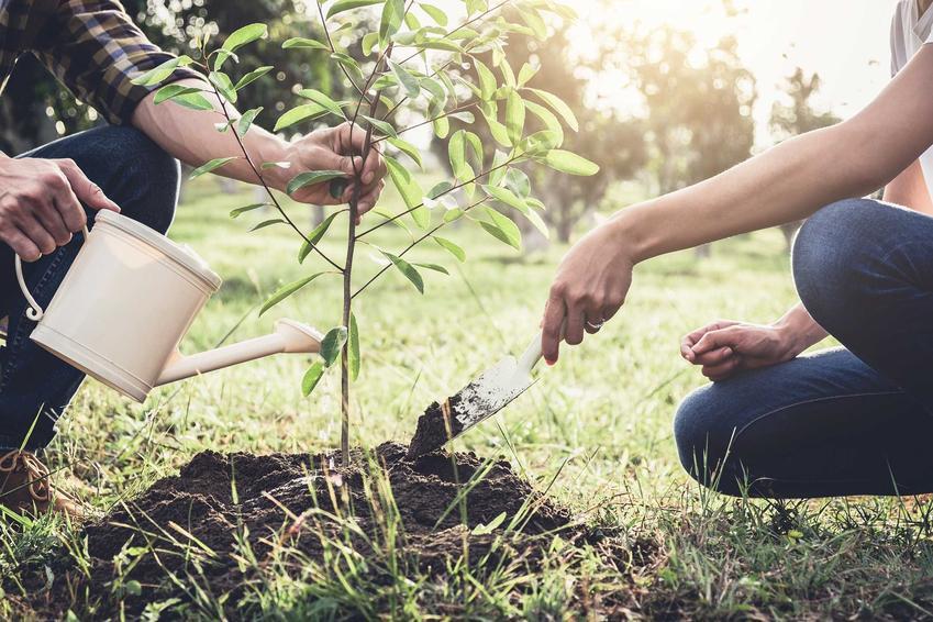 Sadzenie drzewek owocowych w ogrodzie oraz porady kiedy sadzić drzewka owocowe, najlepsze terminy oraz jak sadzić drzewka