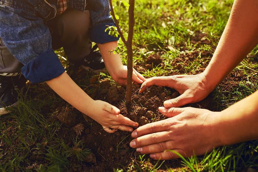 Sadzenie drzewek owocowych w ogrodzie oraz porady, jak i kiedy najlepiej sadzić drzewka owocowe