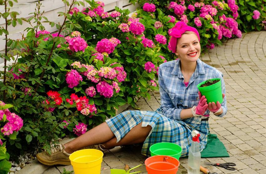 Sadzenie hortensji do gruntu przed kobietę i porady kiedy sadzić hortensje, w tym hortensje bukietowe i hortensje niebieskie