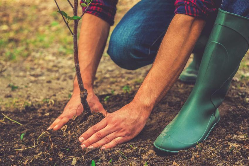 Sadzenie drzew, w tym sadzenie drzewek owocowych oraz porady kiedy i jak sadzić drzewka owocowe, przygotowanie podłoża