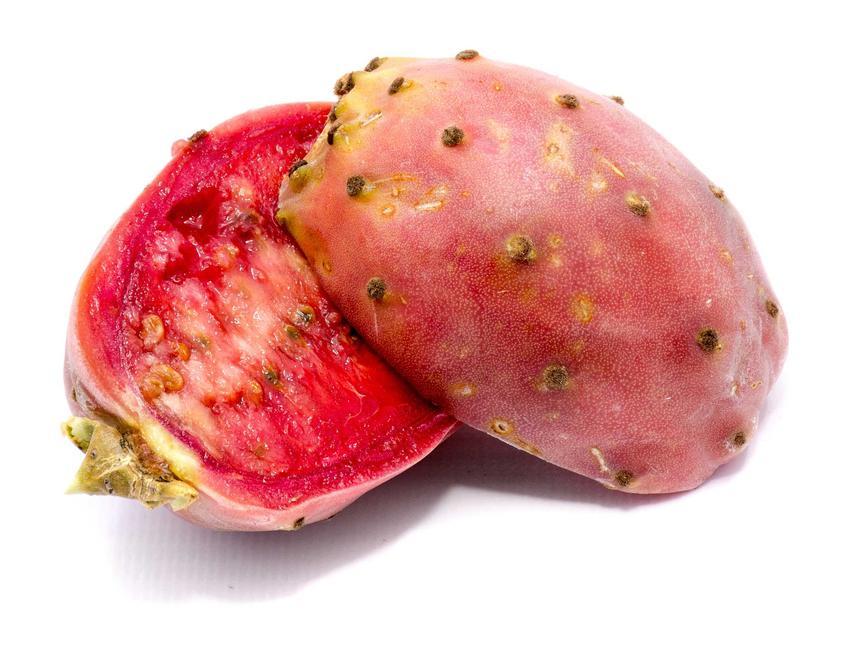 Kaktus opuncja figowa i owoc opuncji oraz jej właściwości lecznicze, a także uprawa i pielęgnacja krok po kroku w doniczce
