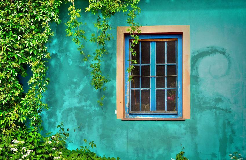 Pnącza wieloletnie a fasadzie budynku, czyli polecane rośliny pnące wieloletnie do ogrodu i na balkon