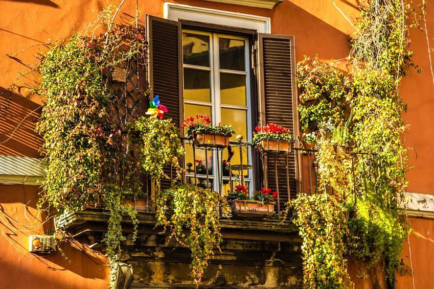 Piękny balkon oraz pnącza na balkon, na przykład bluszcz na balkon i inne rośliny pnące na balkon lub taras do doniczek