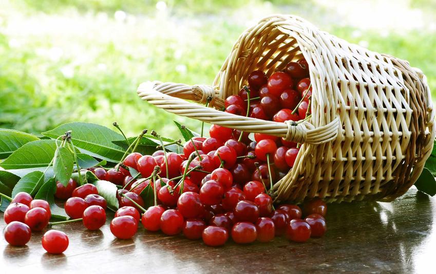 Wiśnie w koszyku na kompot z wiśni oraz przepis, jak ugotować kompot z wiśni oraz kompoty z wiśni do słoików na zimę