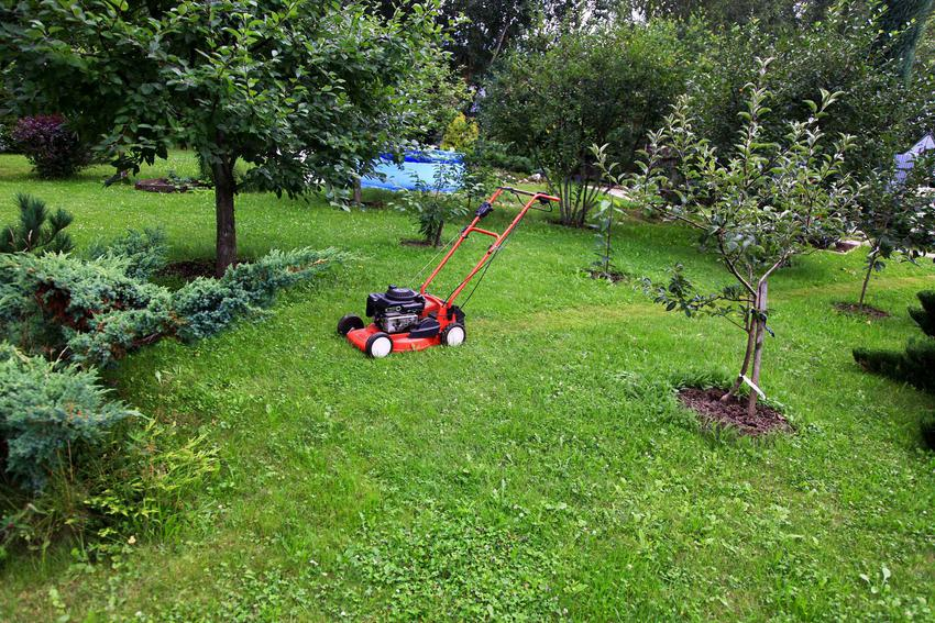 Mulczowanie trawnika czy też mulczowanie trawy oraz funkcja mulczowania w kosiarce - właściwości, zalety mulczowania - porady