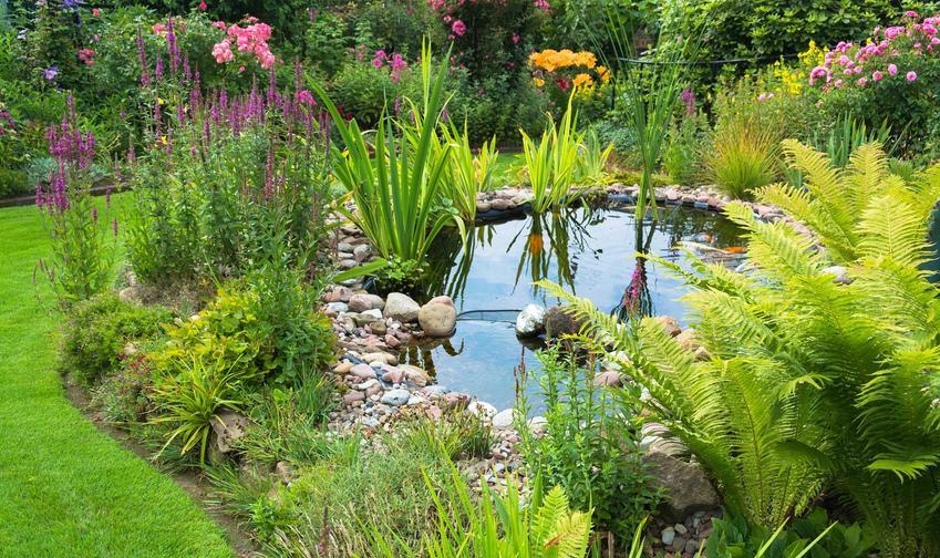 Kompozycja paproci ogrodowych przy oczku wodnym z innymi roślinami oraz odmiany, warunki uprawy, wymagania, stanowisko, sadzenie, pielęgnacja - porady