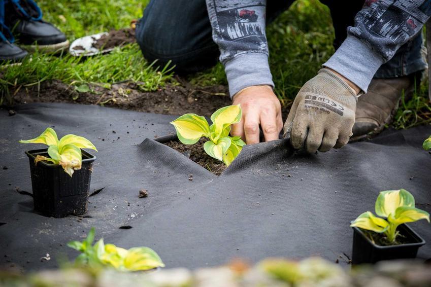 Włóknina ogrodowa pod sadzonkami oraz zastosowanie agrowłókniny, jej właściwości, gramatura, rodzaje, kolory