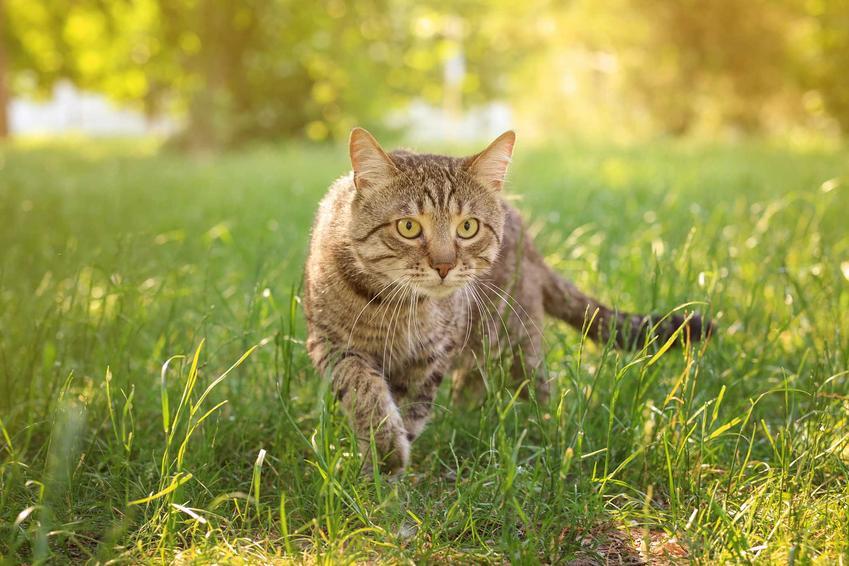 Kot w ogrodzie, czyli jak odstraszyć koty i czym odstraszyć koty
