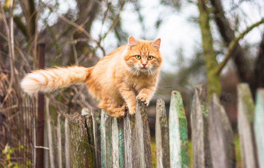 Kot na płocie, czyli domowe sposoby i najlepsze metody na to, jak odstraszyć koty i porady, czym odstraszyć koty