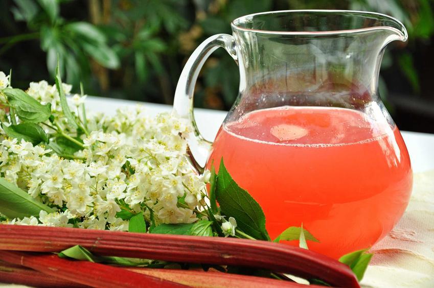 Sok z rabarbaru w dzbanku, czyli sprawdzone przepisy na nalewkę, sok z rabarbaru i inne przetwory z rabarbaru  na zimę