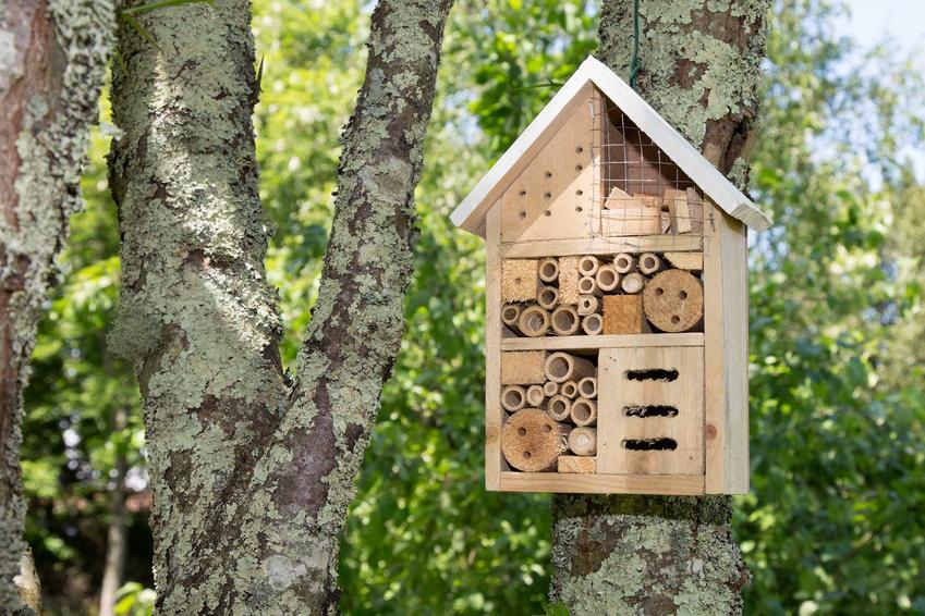 Domek dla pszczół oraz murarki oraz hodowla pszczół murarek w ogrodzie przydomowym krok po kroku, najlepsze wskazówki