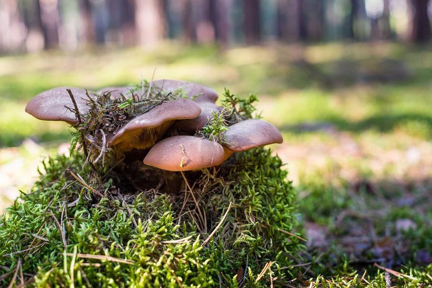 Mikoryza czy też preparat mioryzowy i grzyby mikoryzowe oraz szczepionka mikoryzowa i jej zastosowanie w ogrodzie
