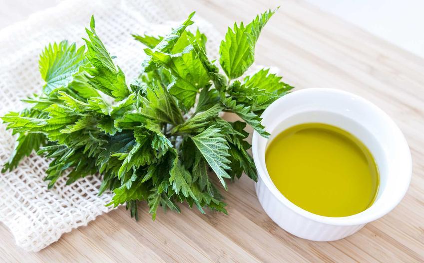 Pokrzywa i syrop z pokrzywy, a także przepis na syrop oraz sok z pokrzyw, przygotowanie, przepis i składniki