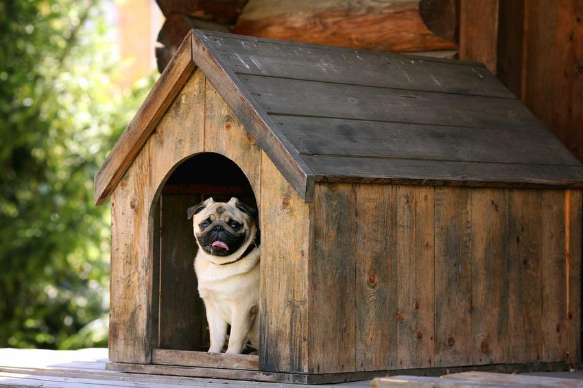 Pies i buda dla psa jako mała architektura oraz porady, jak zrobić budę dla psa krok po kroku, samodzielna budowa budy dla psów