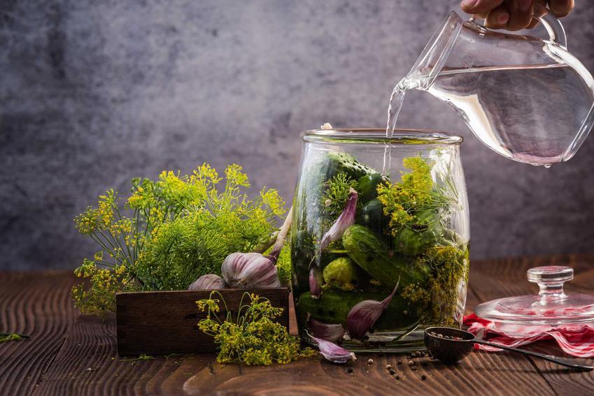 Kiszenie ogórków, czyli przepis na kiszone ogórki z przyprawami, najlepsze sposoby i porady, w czym kisić ogórki