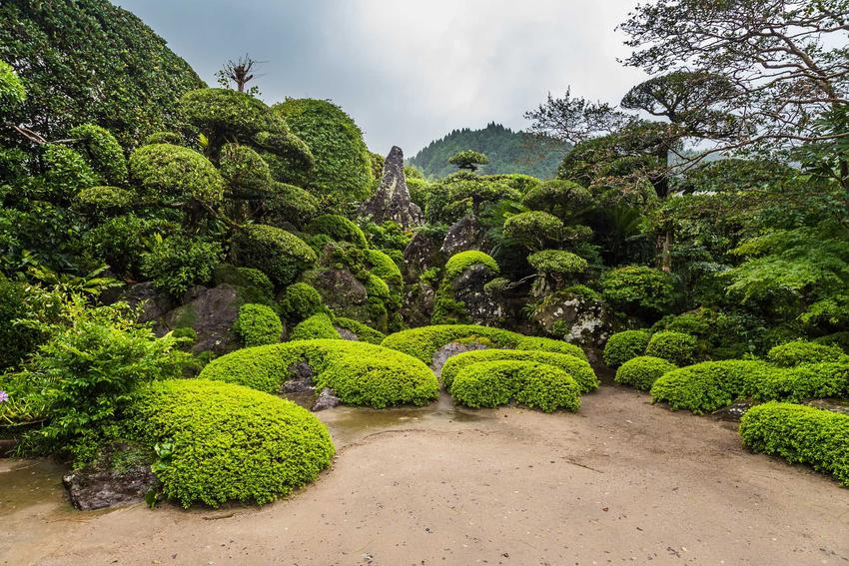 Ogrody japońskie oraz porady jak założyć ogród japoński, rośliny do ogrodu japońskiego oraz porady