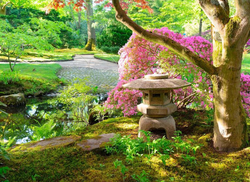 Ogrody japońskie oraz porady jak założyć ogród japoński, czyli ogród japoński krok po kroku, najlepsze rośliny i porady