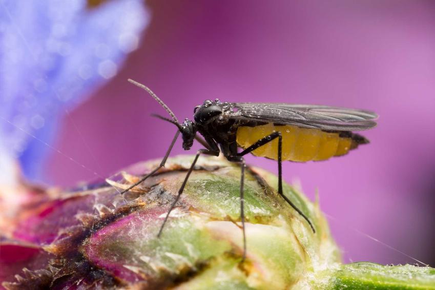 Ziemiórki i zwalczanie ziemórków, czyli porady, jak zwalczyć larwy oraz polecany preparat na ziemiórki