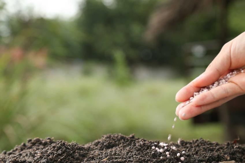 Użyźnianie gleby, czyli porady, jak użyźnić glebę i polecane rośliny użyźniające glebę do zastosowania w ogrodzie