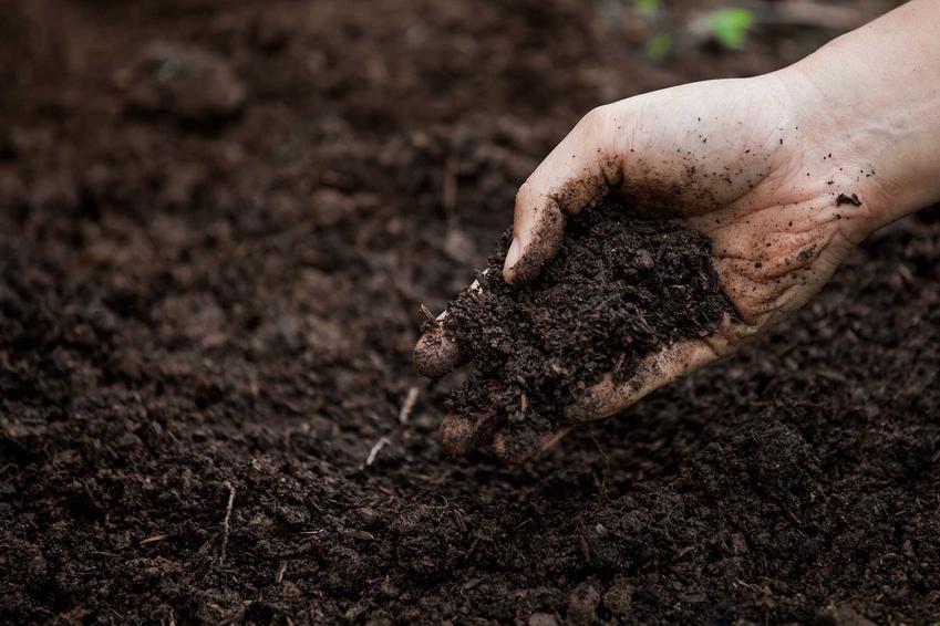 Gleba oraz użyźnianie gleby, czyli porady, jak użyźnić glebę,, czym ją nawozić oraz najlepsze polecane rośliny użyźniające glebę