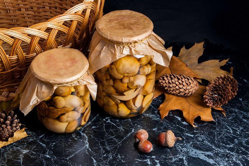 Grzyby w occie oraz marynata do grzybów i zalewa octowa do grzybów marynowanych, najlepsze przepisy i receptury