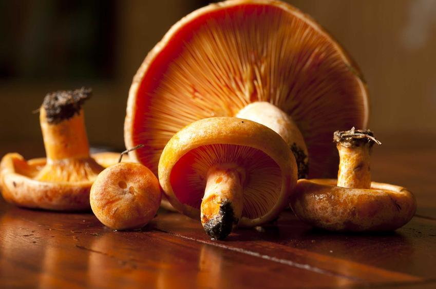 Surowe rydze oraz rydze marynowane, a także marynata do rydzów i polecana zalewa octowa z przyprawami do grzybów