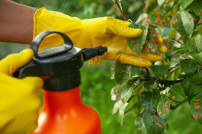 Opryski drzew owocowych oraz porady, kiedy opryskiwać drzewa owocowe, opryski wiosenne i jesienne, prewencyjne i interwencyjne