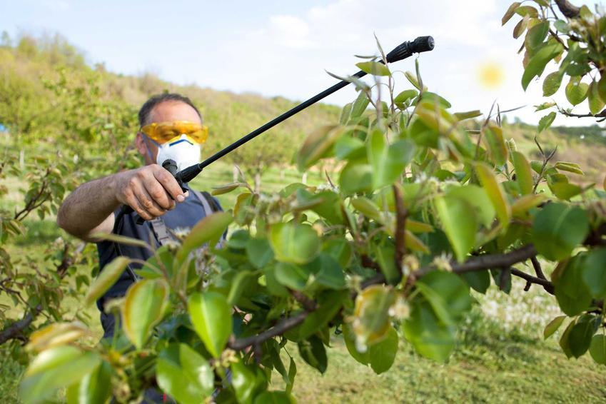 Mężczyzna opryskujący drzewo oraz opryski drzew owocowych i kiedy opryskiwać drzewa owocowe na wiosnę prewencyjne