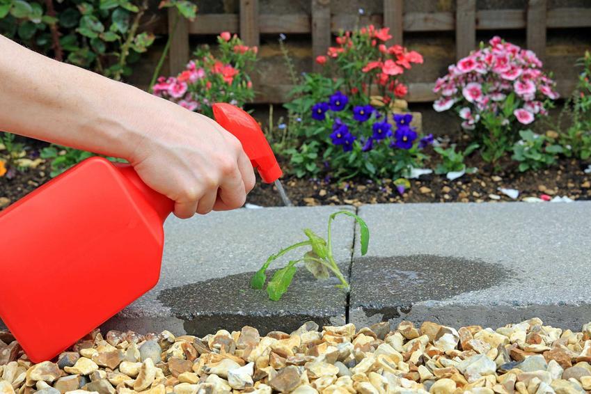 Oprysk na chwasty w ogrodzie i na trawie, czyli opryskiwanie chwastów i polecane środki do zwalczania chwastów