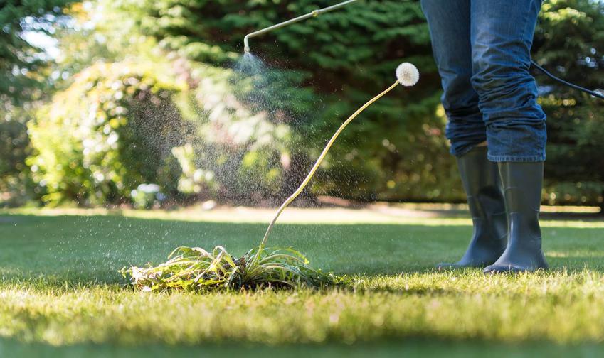 Chwasty na trawniku i chwasty w trawie, a także zwalczanie chwastów i środek na chwasty w trawie, stosowanie i dawkowanie