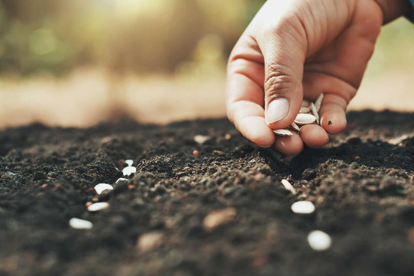 Wysiew nasion oraz stratyfikacja nasion, w tym stratyfikowanie, nasion brzoskwini, nasion jabłoni czy orzecha włoskiego - przygotowanie nasion do uprawy