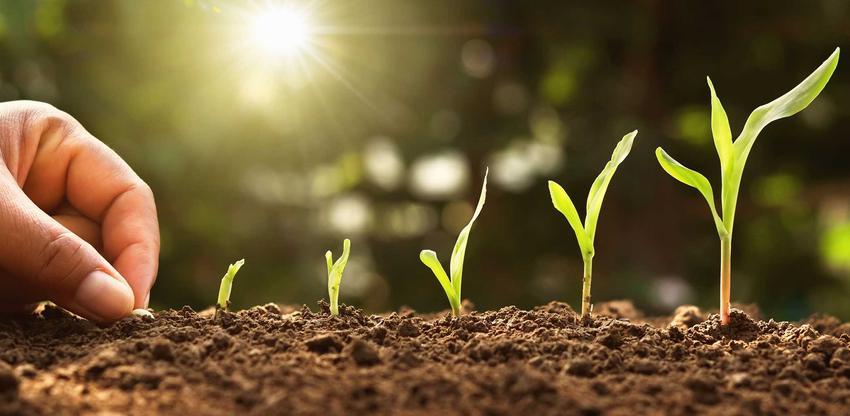 Stratyfikacja nasion, na przykład stratyfikowanie, nasion brzoskwini, nasion jabłoni czy orzecha włoskiego czyli jak przygotować nasina do uprawy