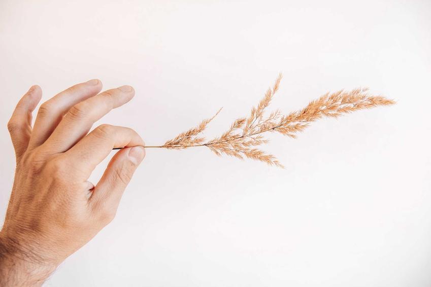 Nasiona traw ozdobnych, w tym wieloletnich traw ozdobnych i mieszanka traw ozdobnych do wysiania w ogrodzie, najlepsze gatunki