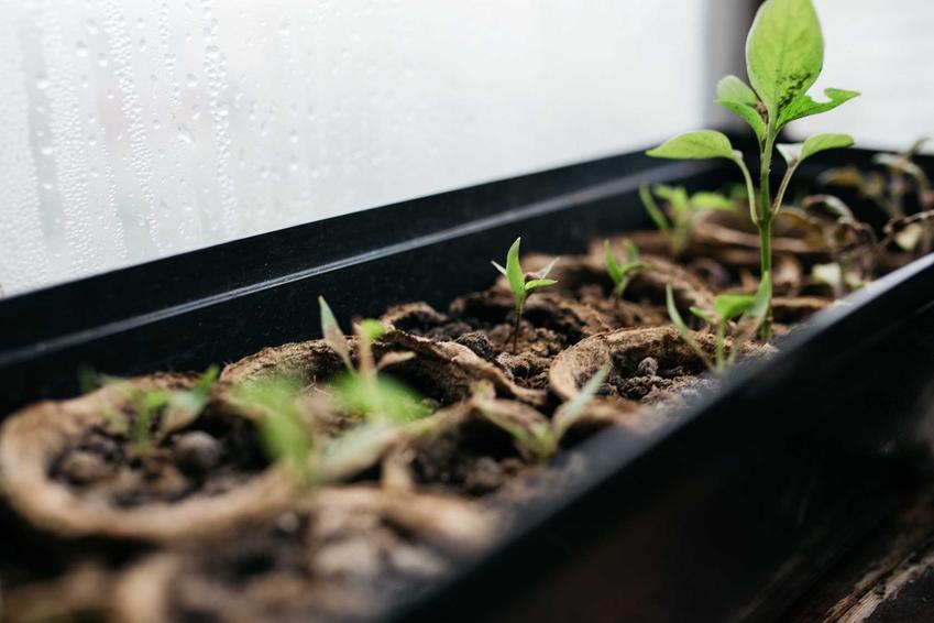 Warzywniak w skrzyniach, czyli mały ogródek warzywny w skrzynkach i polecany warzywnik przy domu krok po kroku