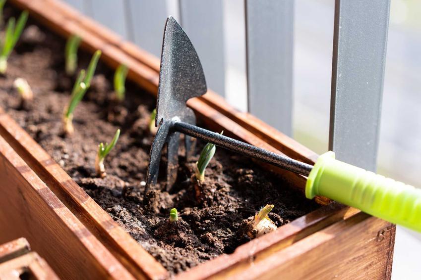 Warzywniak w skrzyniach, czyli mały ogródek warzywny w skrzynkach i sposób na zrobienie idealnego warzywniaka w ogordzie