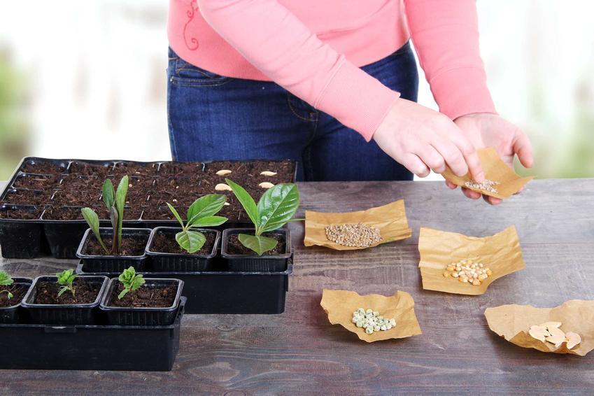 Nasiona warzyw gruntowych i ziół podczas wysiewu, a także sklep ogrodniczy versus zakupy roślin w sklepach internetowych online